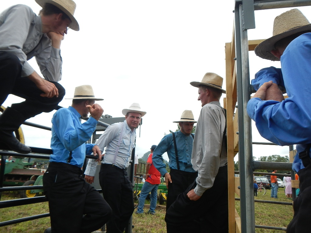 Amish Auctions  June 2014