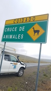 Llama's crossing the road. Yes, shortly after seeing this sign one jumped out in front of me.